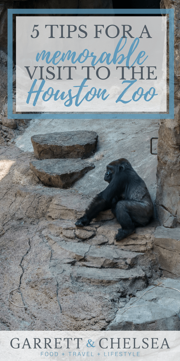 5 Tips for a Memorable Visit to the Houston Zoo